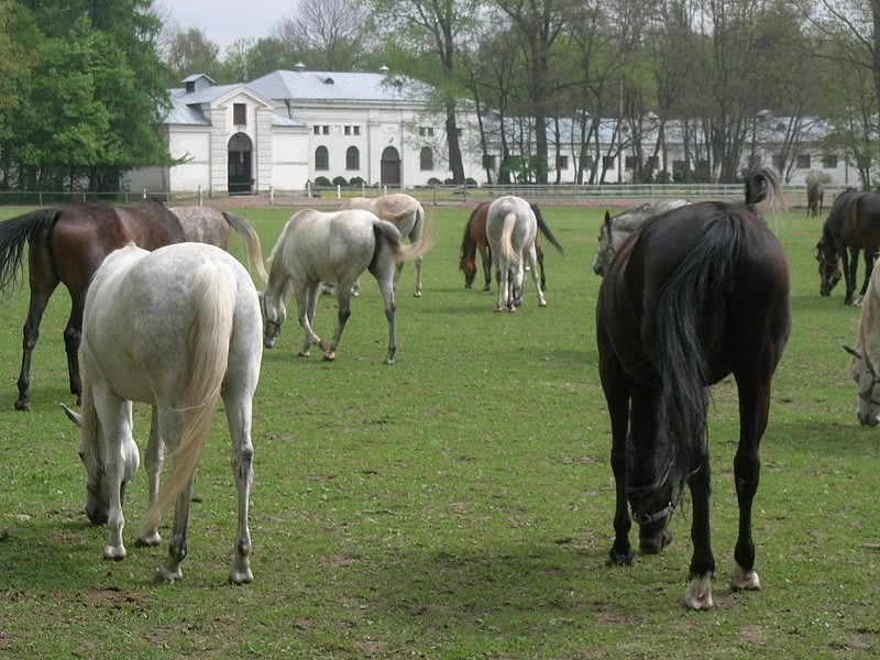 Horse riding and other horse attractions in Poland