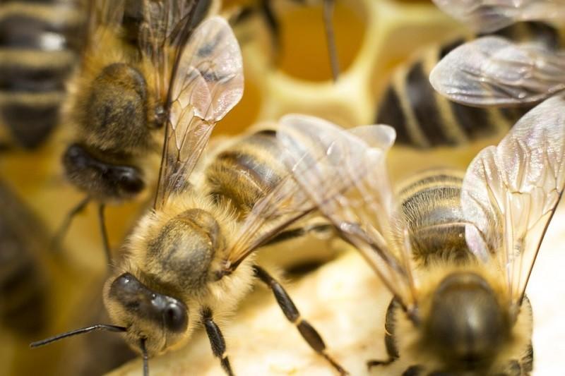 Educational Beekeeping Trail, Zuzia's Apiary, Domaszków