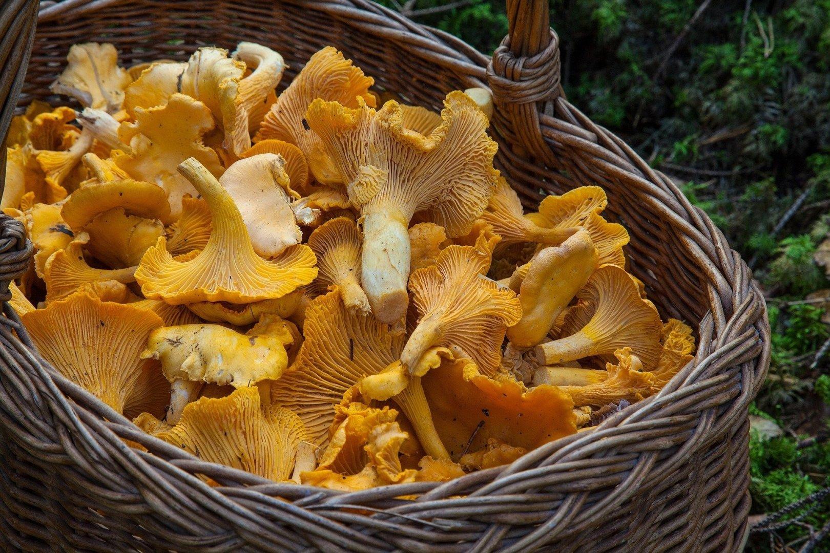 Mushroom picking in Poland