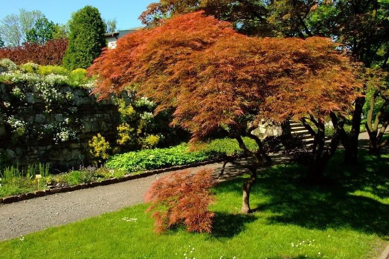 Jagiellonian University Botanical Garden