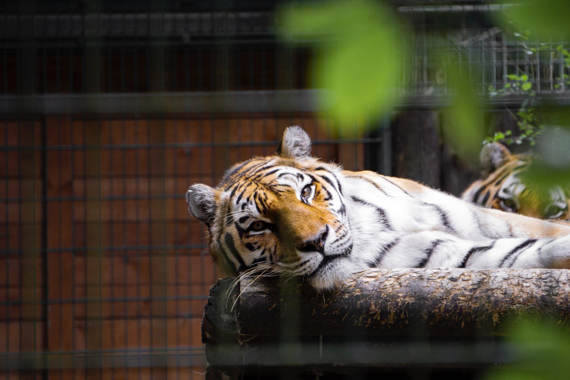 Gdańsk Zoological Garden