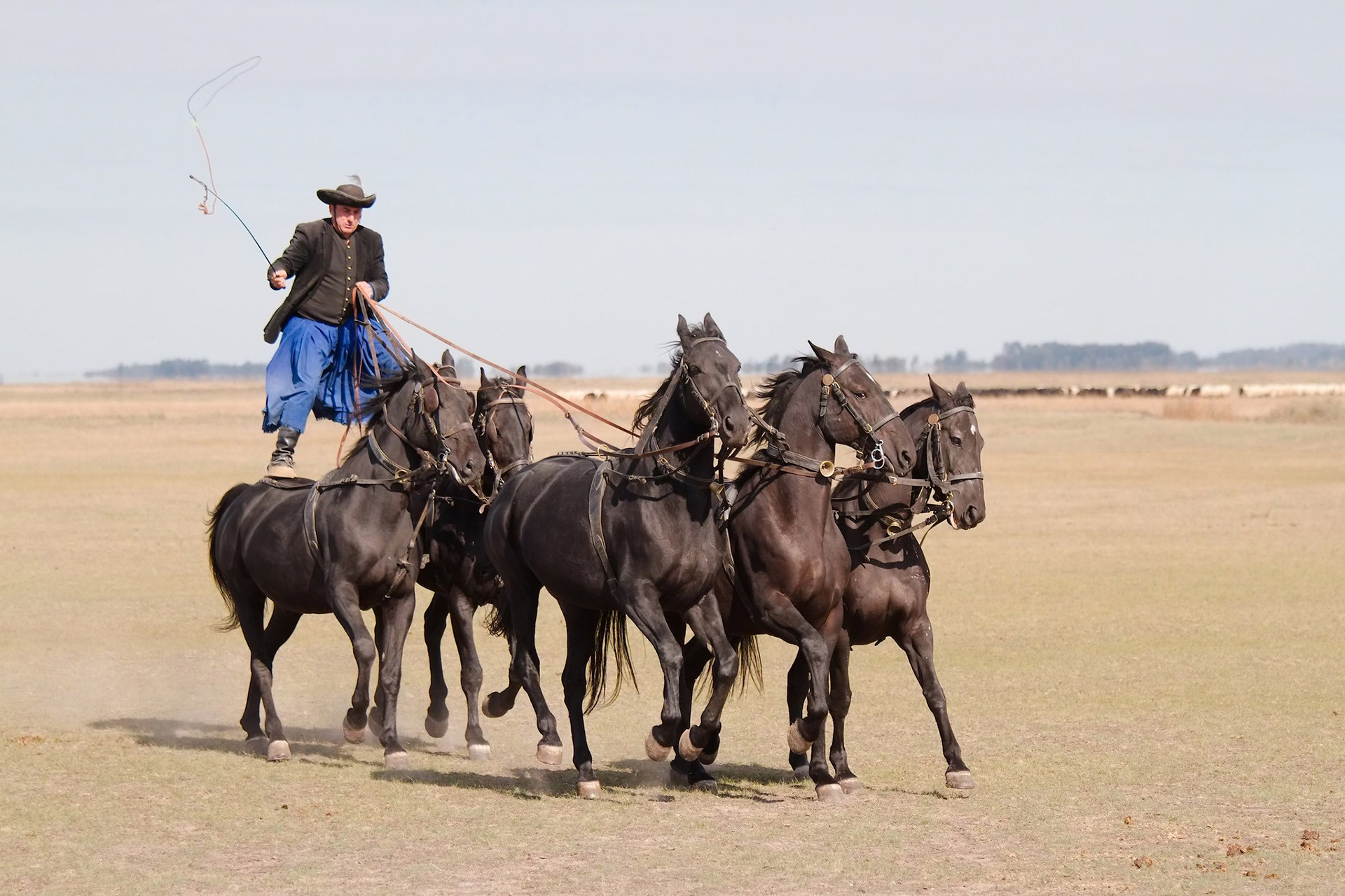 Puszta horse show Hungary