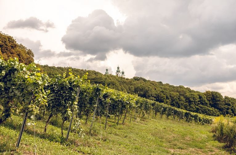 Wine Workshops and Tasting