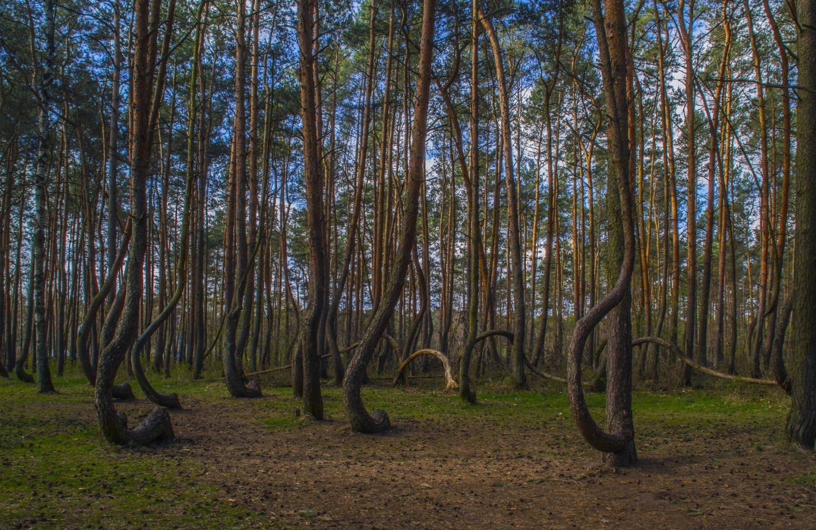 Szczecin Area Landscapes