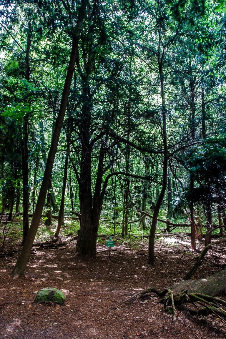 Bory Tucholskie National Park