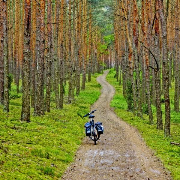 Kampinoski National Park