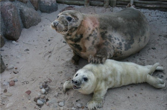 Seal Sanctuary in Hel
