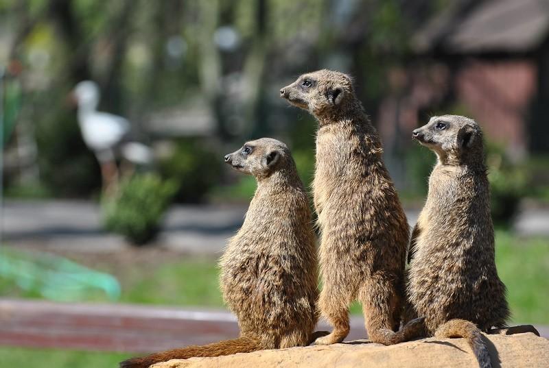 Zoo Leśne Zacisze